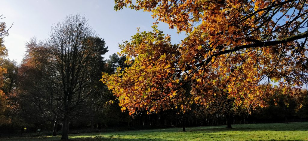 Photo of trees with gold and brown leaves depicting autumn